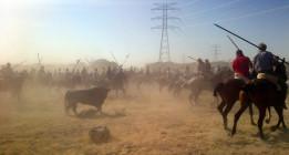 La ansiedad y las lanzas de Tordesillas matan al astado 'Volante'