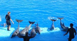 Dos extrabajadores denuncian malos tratos a animales del Oceanogràfic de València