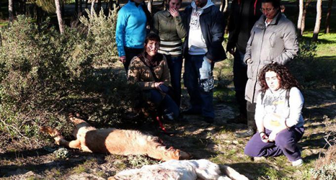 La Junta de Andalucía autoriza una cacería de perros asilvestrados en Punta Umbría