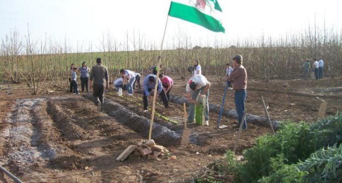 Las malas cosechas empeoran la situación de los jornaleros andaluces