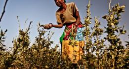 La plaga del hambre no abandona el Sahel