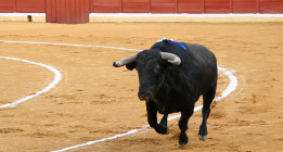 Carmena retira la subvención a la escuela de tauromaquia de Madrid