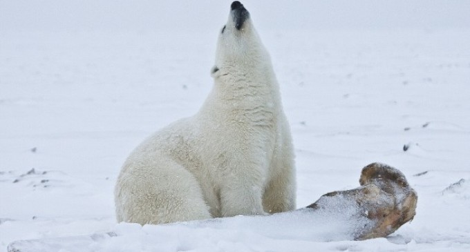 Los objetivos de la ONU contra el cambio climático tendrían resultados desastrosos, según un estudio