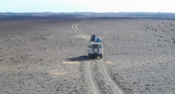 La épica búsqueda de los últimos guepardos del Sahara