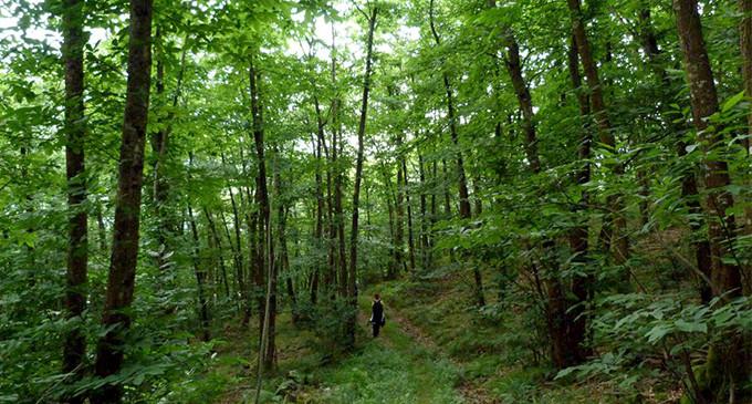 Consecuencias forestales de la desamortización del XIX