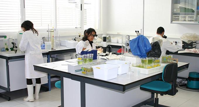 El trabajo de investigación de base en el CSIC