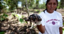 ¿Qué son los crímenes económicos y ecológicos internacionales?