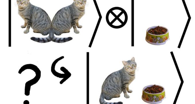 ¿Qué mató al gato de Schrödinger?
