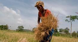 <em>La tierra, para las mujeres que la trabajan</em>