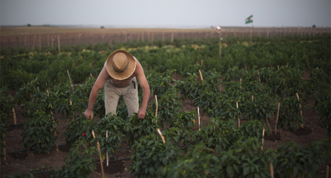 80 familias acaparan 100 millones de euros de la PAC en Andalucía