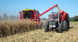 La contaminación amenaza la producción de trigo en España