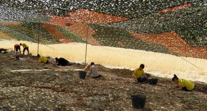 Rastrean los pasos de un dinosaurio único en un yacimiento en Burgos