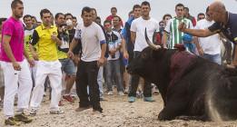 Agresiones y retenciones a antitaurinos en el Toro de la Vega