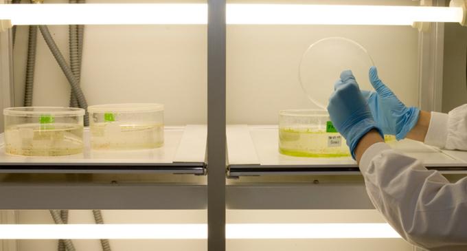 Cofely se encarga del mantenimiento del laboratorio que analiza las muestras del ébola