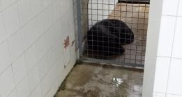 Aristas cortantes y humedades en las instalaciones caninas de la Policía en Sevilla