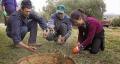 La persecución del rebusco amenaza el sustento de miles de familias en Extremadura