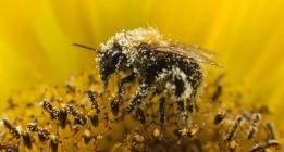 El polen, algo más que alergias