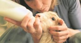 Santuarios de animales: volver a la vida