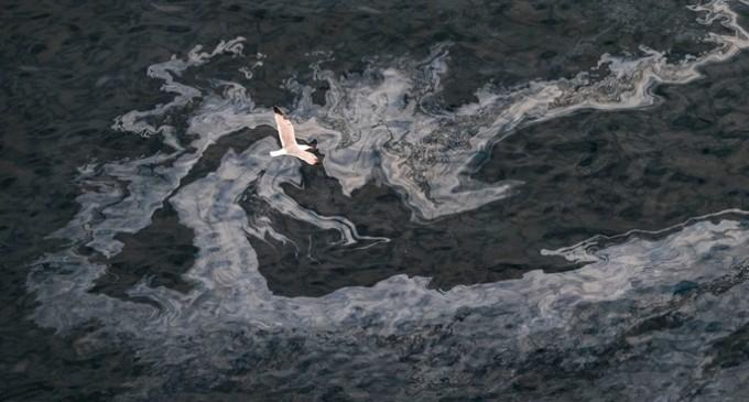 Greenpeace alerta de que varios regueros de fuel se acercan a la costa canaria