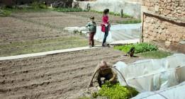 El medio rural busca el modo de sobrevivir
