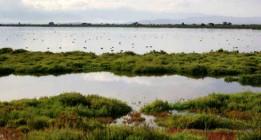 """BirdLife constata el """"fracaso"""" de la UE en los objetivos de biodiversidad para 2020"""