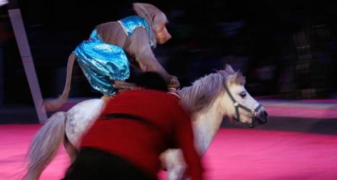 Cataluña, primera comunidad en España en prohibir animales salvajes en los circos