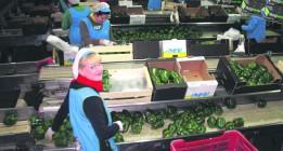 Creciente participación de las mujeres en las cooperativas