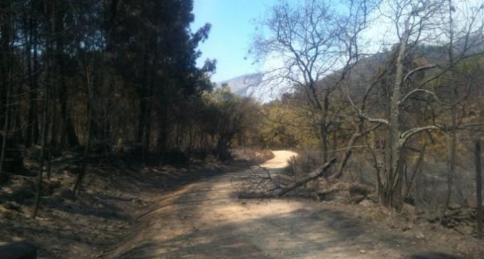 La Ley de Montes y los recortes dificultan la lucha contra los incendios