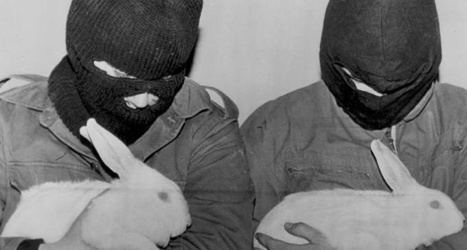 """Represión y amenazas a los """"ecoterroristas"""" que liberan animales"""