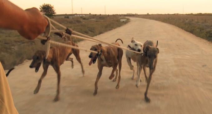 Arranca el infierno para los perros de caza