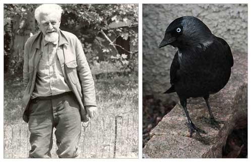 Gracias a los textos de Konrad Lorenz, podemos maravillarnos de las facetas de la vida social de muchos animales, especialmente de aves como las grajillas.