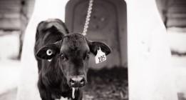 Objetivo: poner los derechos de los animales a la vista de todos