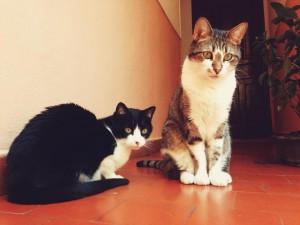Gatos de Belén Lobeto. Lluna y Xuacu.