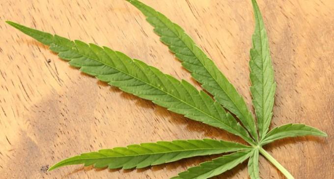 """Una marcha mundial pide una """"regulación valiente"""" del cannabis"""