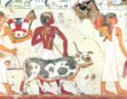 La amnistía fiscal… en el antiguo Egipto