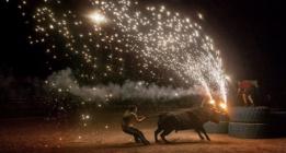 Santa Fiesta: una crueldad continua desde los toros a las ratas