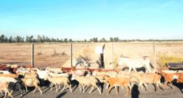 Las amenazas de ida y vuelta en Doñana