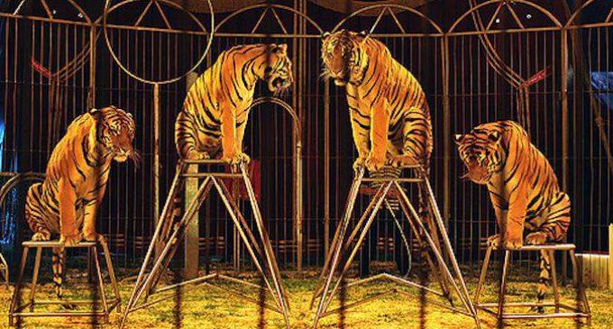 Madrid abre la puerta a la prohibición de los circos con animales