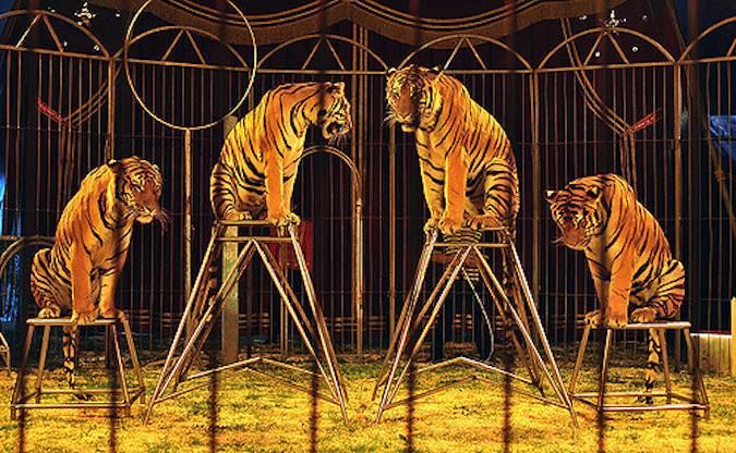 Circo con animales.