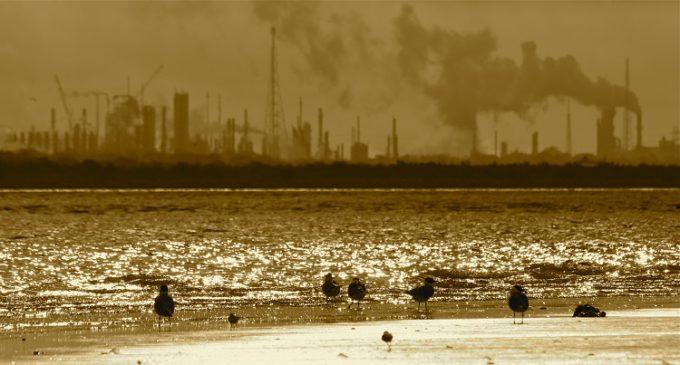 Científicos de Harvard confirman que Exxon confundió al público sobre el cambio climático