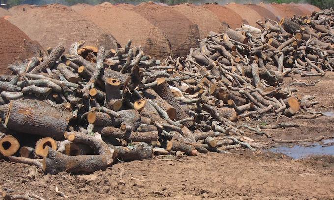 Leña de Quebracho blanco utilizada para la fabricación de carbón vegetal (foto: Earthsight).