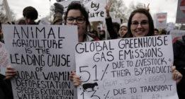 Noticias climáticas: del deshielo a un impuesto a la carne