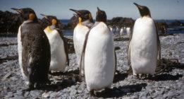 Noticias climáticas: Impactos sobre la agricultura (y los pingüinos)