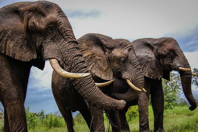 elefantes, botswana, africa, botsuana